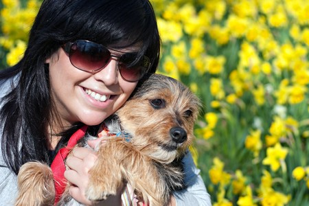 A cute terrier mix breed pup being held by his owner posing in front of the Spring daffodil flowers. photo
