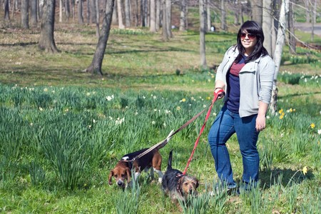 beagle mix: A young woman walking her two dogs in the park on a sunny day. Stock Photo