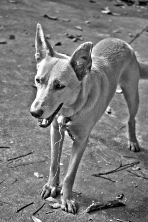 A mixed breed mutt dog in black and white high dynamic range. photo