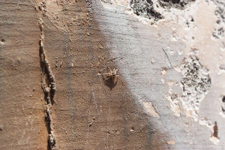 Close up of a tropical Caribbean spider on an old concrete wall.  Shallow depth of field. photo