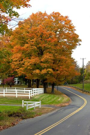 A bright orange maple tree in a country setting during the autumn months. photo