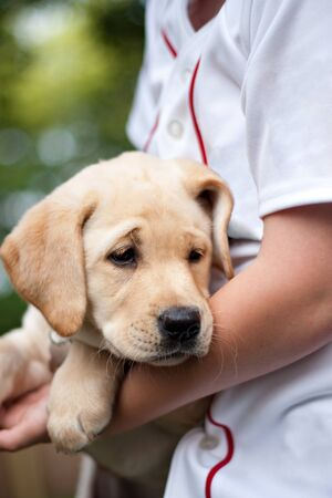 shallow depth of field: Close up of a cute yellow labrador puppy being held in the arms of a young boy. Shallow depth of field.