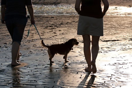 Back lit portrait of two women walking a cute borkie dog at the beach. photo
