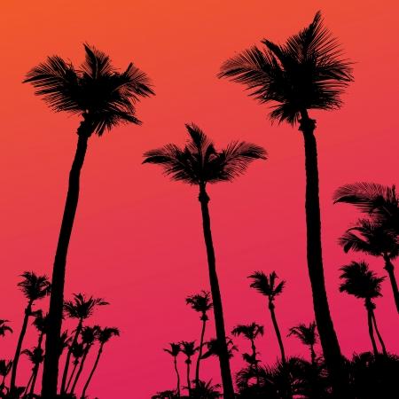 Tropische kokos palmboom silhouetten illustratie over een paarse zonsondergang hemel in formaat.