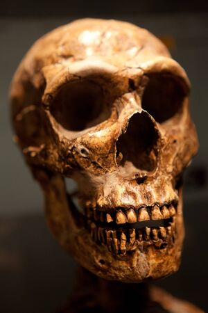 Close up of an old Human skull fossil. Stock Photo - 15322253