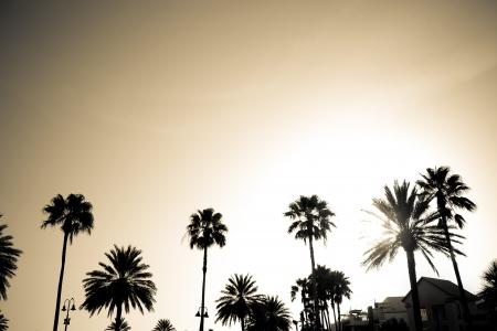 Silhouetten van tropische kokospalmen op een vroege avondhemel.