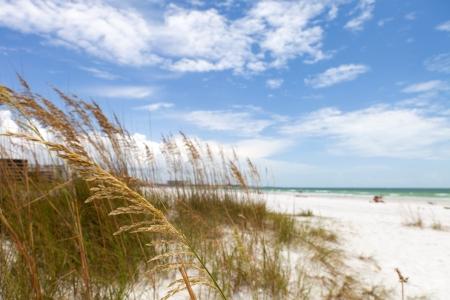 Siesta Key Beach is gelegen aan de Golf kust van Sarasota Florida met fijne zand. Onlangs beoordeelden de nummer 1 strand locatie in de Verenigde Staten. Ondiepe diepte van gebied met nadruk op de grassen. Stockfoto