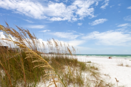 Siesta Key Beach is located on the gulf coast of Sarasota Florida with powdery sand. Recently rated the number 1 beach location in the United States. Shallow depth of field with focus on the grasses. Stock Photo