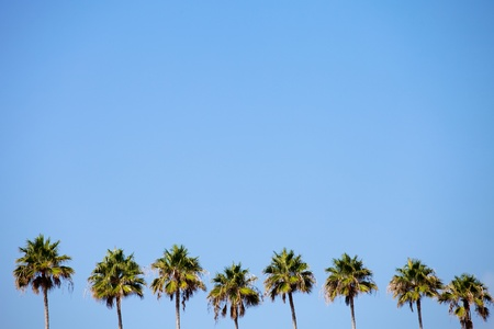 A row of palm trees over a blue sky with plenty of negative space. Stock Photo
