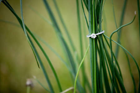 A diamond engagement wring held up by some wild onion grass. Stock Photo