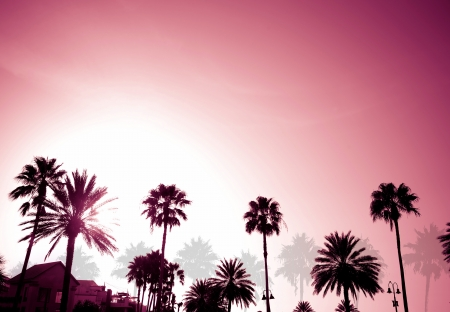 Tropical coconut palm tree silhouettes on a purple sunset.