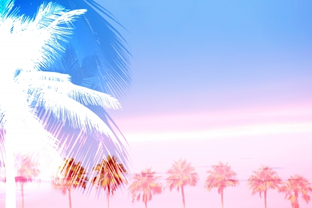 Een montage van tropische palmbomen over een zonsondergang hemel met veel negatieve ruimte. Stockfoto