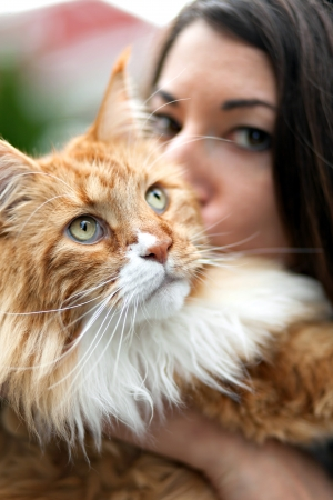 coon: Woman kisses her cherished purebred Maine Coon cat.  Shallow depth of field. Stock Photo