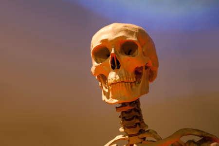 beenderige: Oude benige schedel skelet onder dramatische verlichting.