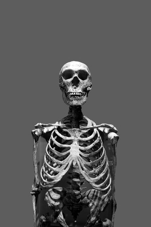 Old bony skeleton isolated over a gray background in black and white. Imagens