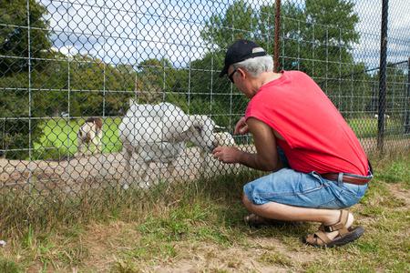 feeding through: Man feeding a little goat through the fence.