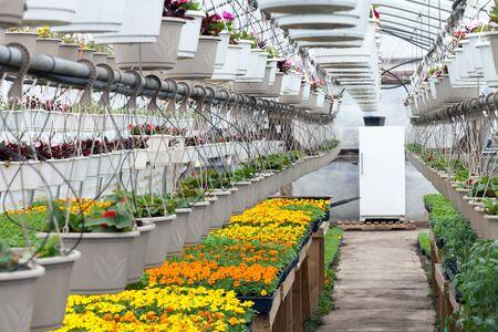 Bloemen groeien in een kwekerij kassenbouw.