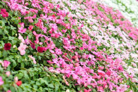 Diverse bloemen in meerdere kleuren met een ondiepe scherptediepte.