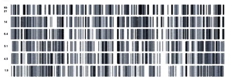 Illustration of a human dna strands in black and white
