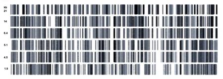 adn humano: Ilustraci�n de una hebras de ADN humano en blanco y negro Foto de archivo