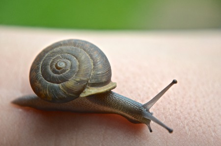 Macro Closeup of Garden Snail Reklamní fotografie - 44231911