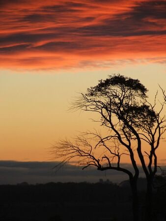 A tree silhouetted against a cool October sunrise. 版權商用圖片