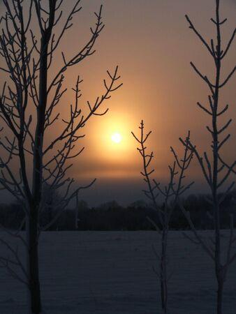 Trees silhouetted against a frigid February sunrise.