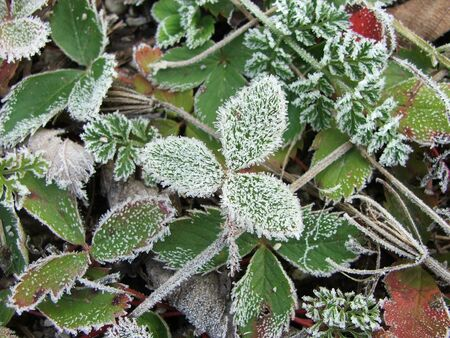 Frost covered plants on a cold October morning. Archivio Fotografico
