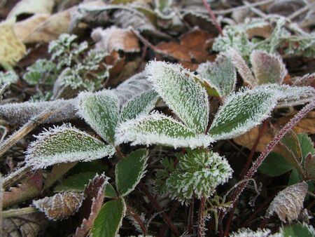 Frost covered plants on a cold October morning. 版權商用圖片