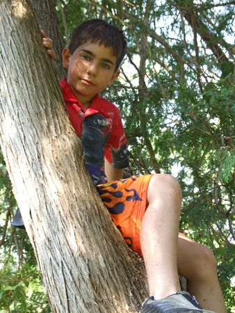 A boy, sitting in a tree, posing for a picture.