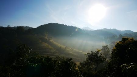 Tea Plantation Lizenzfreie Bilder