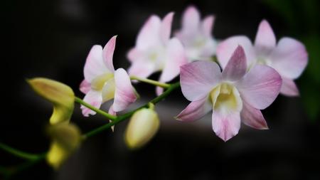 Orchidee Lizenzfreie Bilder
