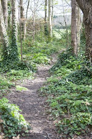 wooded path: pathway through the forest Stock Photo
