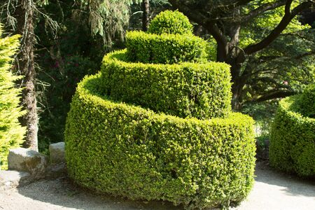 buxus plant trimmed in a spiral shape