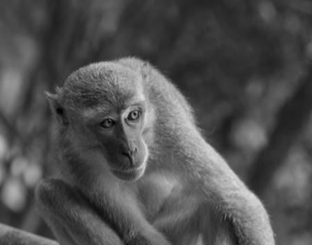 A monkeys gaze