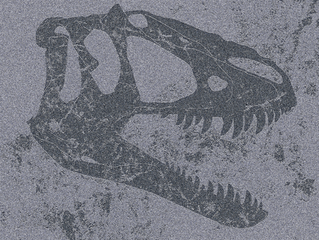Section of skull of tyrannosaur in flat grey rock