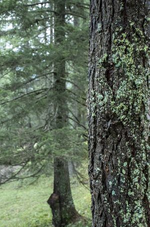 Green fresh forest landscape with trunk and moss Banco de Imagens