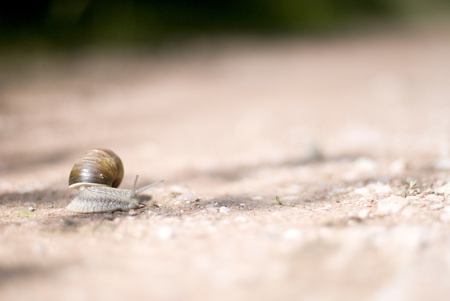 babosa: Snail in nature - Copy space
