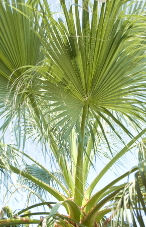 climas: Palm leafs over blue sky background
