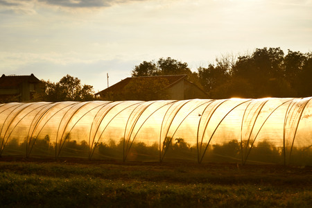 Greenhouse tunnels from polythene