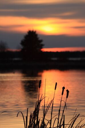 cattails: Golden Sunset Stock Photo