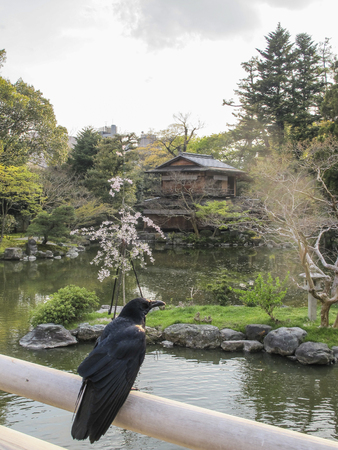 corvo imperiale: sala da tè e corvo in giardini del palazzo imperiale, Kyoto Archivio Fotografico