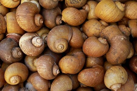clam gardens: a groub of snail shells