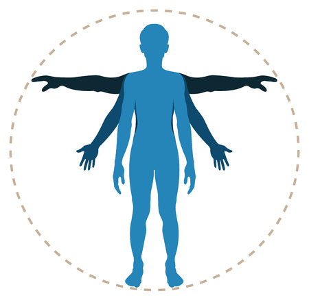 nude male body: human body structure in vector