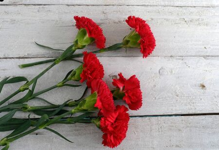 red  carnation: red carnation on white wooden background