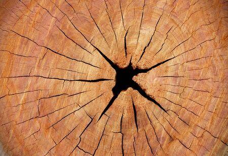 tronco: agrietada textura de madera de tronco de árbol cortado