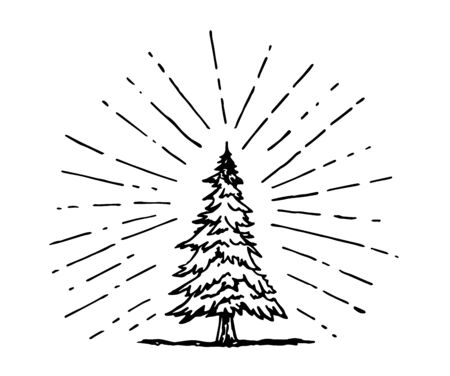 pine tree drawing in doodle style with sun ray surrounding