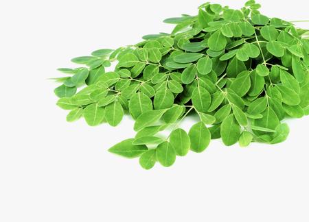 pile of moringa leaves on white backgroun Stock Photo - 124165350