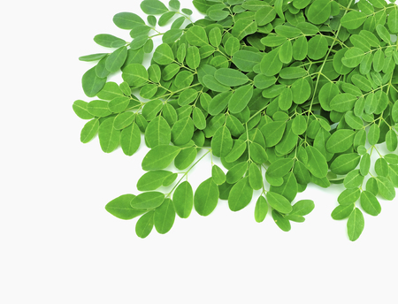 moringa leaves with branch on white background Stock Photo