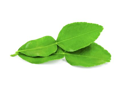 two kaffir lime leaves on white bacground